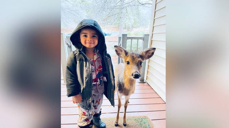 4-year-old Dominic made friends with a baby deer.