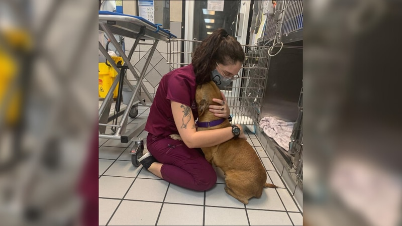 Richmond Animal Care and Control is encouraging kindness toward veterinarians.