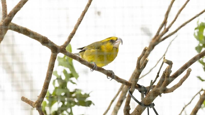 Bird on nature walk