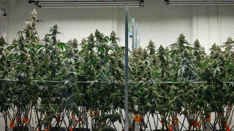 Marijuana manufacturer, Columbia Care is based in Portsmouth, VA.