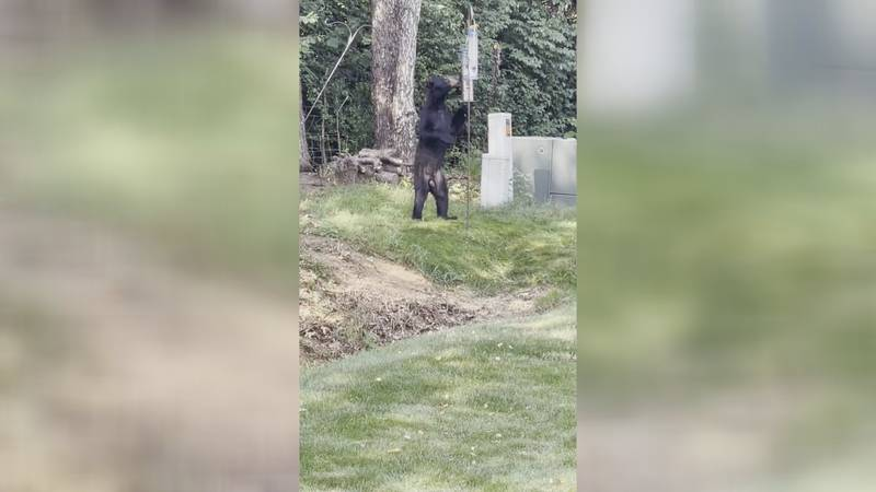 Lorraine Cormier catches a bear stealing her bird food earlier this week. (WHSV)