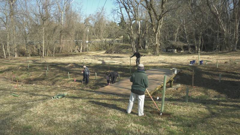 volunteers from the RCA plant trees at an Albemarle County creek