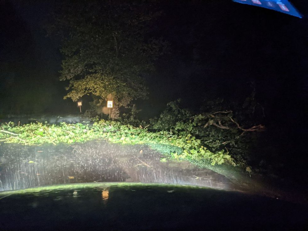 Downed tree limbs in Staunton from Tuesday night's storm
