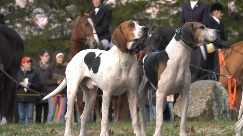 """2019's """"Blessing of the Hounds"""" event.  2020's has been cancelled."""