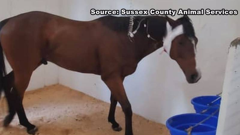 Former race horse undergoing surgery after crash that killed one person and three other horses.