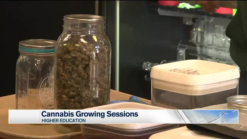 Growing cannabis sessions