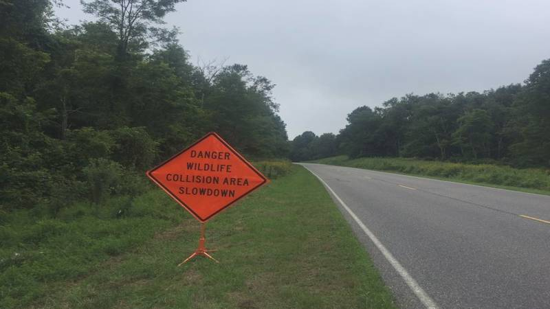 Park officials hope to decrease deer-related collisions with signage through the park.