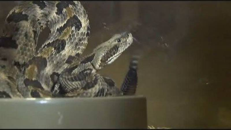 Snake bites are on the rise in comparison to 10 years ago
